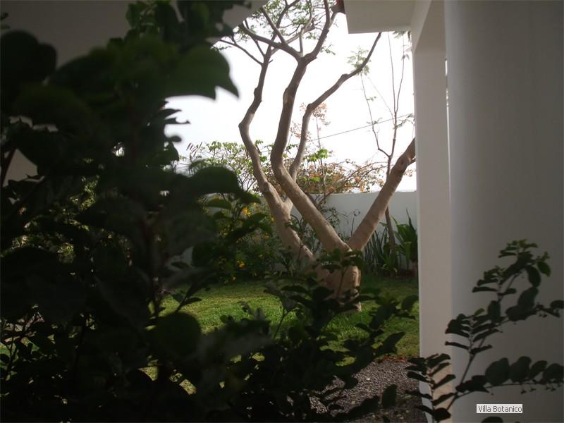04_Blick zum Feuerbaum